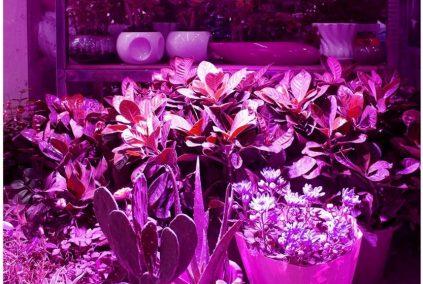 lampe horticole plante grasse