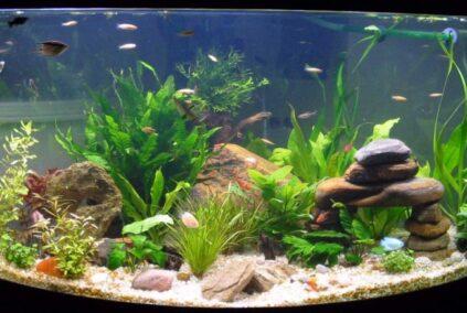 Comment amorcer une pompe d'aquarium